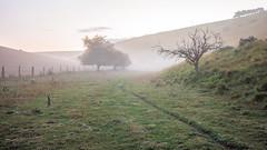 Wolds - Cottam Well Dale_1 (Tony McLean) Tags: ©2018tonymclean yorkshirewolds landscape autumn dawnlight eastyorkshire leicam240 leica35summiluxfle