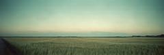 The field (Rosenthal Photography) Tags: felder dänemark ff120 kodakportra400 lochkamera sonnenuntergang 6x17 houvig realitysosubtle6x17 nordsee asa400 20180709 epsonv800 pinhole mittelformat urlaub c41 strase sonne analog color field sunset dawn kodak portra epson v800 landscape denmark danmark realitysosubtle rss northsea