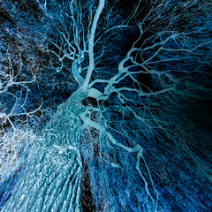 the inverse (m_laRs_k) Tags: blue luisenpark tree inverted omd olympus 7dwf hss superwide lightroomed