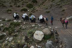 D4I_1566 (riccasergio) Tags: china cina tibet kailash alidiqu xizangzizhiqu cn kora