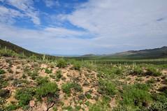 Saguaro National Park (markusOulehla) Tags: carnegieagigantea carnegiea arizona saguaronationalpark usa uswildlife markusoulehla oulehla nikon nikonnature nikond90 arizonalandscape saguaro cactus kaktus kakteen