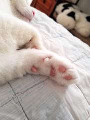Kewpie: Pinky Pads & Nose (Tabo Kishimoto) Tags: kewpie pink paws nose gato chat neko katzen catnap