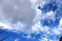 DSC_1603 (PeaTJay) Tags: nikond750 reading lowerearley berkshire gardens outdoors nature blue sky clouds
