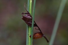 IMG_0020 Stay Awhile (oldimageshoppe) Tags: leaf wildgrass wet rain morninglight latesummer