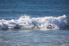 2018.09.15.07.43.58-WhompOffAustralia-053 (www.davidmolloyphotography.com) Tags: bodysurf bodysurfing bodysurfer surf beach whompoff whompoffaustralia australia newsouthwales sydney cronulla