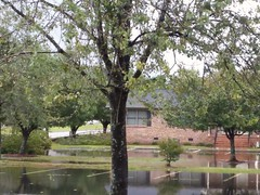 September 16th, 2018 - Hurricane Florence Sunday morning. For now the rain has stopped here in Lumberton at the apartment complex where my wife and I live. (dccradio) Tags: lumberton nc northcarolina robesoncounty outdoor outdoors outside sky cloudy overcast tree trees foliage leaf leaves branch branches treebranch treebranches treelimb treelimbs apartments apartmentbuilding brickbuilding downedtrees architecture fallen downed fallentrees steps stairs water standingwater flood flooding flooded floodwater bodyofwater parking paved pavement parkinglot reflection september sunday morning goodmorning latesummer earlyautumn earlyfall grass lawn greenery puddle