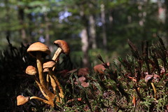 Micro world (RW-V) Tags: canoneos70d canonefs35mmf28macroisstm parkbergenbos fôret forest wald bos champignon mushroom pilz paddestoel sooc 100faves 150faves 175faves 200faves 225faves 250faves 275faves 300faves 325faves 3000views 350faves 5000views 375faves 6000views 7500views 400faves