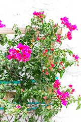 Lovlies growing by the wall (LarryJay99 ) Tags: lakeworth florida streets reda flowers blooma urban nature urbannature