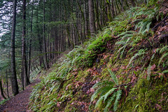 Multnomah Falls Trail, Multnomah County, Oregon, USA (takasphoto.com) Tags: america aqua beautifulnature cascada cascade cascata chutedeau columbiarivergorge d600 drive driving eeuu estadosunidos fotografíadepaisaje fullframe invierno landscape landscapephotography landschaftsfotografie lens meltwater montaña mountain mountains nature nikkor nikkor2880mm nikkor2880mmf3356g nikkor2880mmf3356gautofocus nikon nikond600 noroestepacífico noroestedelpacífico northamerica ontheroad oregon outdoor pnw pacificnorthwest pacificocean paisaje pazifischernordwesten photography river roadtrip rockymountains season stream thác time transportation travel travelphotography traveling travels trip usa unitedstates unitedstatesofamerica vandfald vasser vesiputous viaje water waterfall westcoast winter