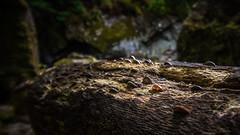 Coin tree (G. Warrink) Tags: wales visitwales cymru findyourepic lovewales beautifulwales discoverwales river stream water rocks fairyglengorge brook ffosanoddun