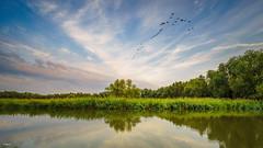 Sunset at Rhoon. (Stevox-1) Tags: voigtlander15mmf45iii 15mm sunset water sky clouds trees nature ngc landschap landschape birds moon goldenhour holland wolken a7ii