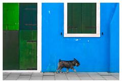 Burano citizen (Blende1.8) Tags: dog pet hund street strase burano italy italien venice italia venezien venezia veneto venedig outdoor facade fassade door window fenster tür blus blau green grün color colour colourful vivid farbig farben bunt carstenheyer nikon d5000