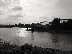 Die Elbbrűcken von Entenwerder aus gesehen (maramillo) Tags: maramillo black white river hamburg bridge water scape