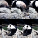 Bei Bei (I'm three. I'm cool–just coolin' off in my pool.) 2018-08-28 at 1.27.24 PM