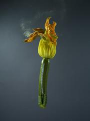 cocozza.. (Antonio Iacobelli (Jacobson-2012)) Tags: hasselblad led verdure zucchine cocozza bari