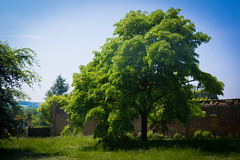 An English Summer (ellieupson) Tags: polesdenlacey nationaltrust england summer sun greenblue tree leaves countryside garden grass landscape britain