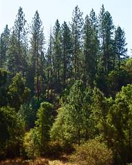 DSC_1691-a12 (stumbleon) Tags: nikondslr nikond7200 amadorcountycalifornia landscape trees california rural countryroads grassland rollinghills