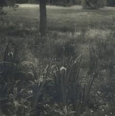 (ludwigwest) Tags: polaroid blackandwhite sx70 600