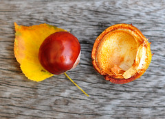 Conker and leaf (Martyn.Hayes) Tags: autumn fall september october november leaf nature brown red conker acorn stilllife outdoors
