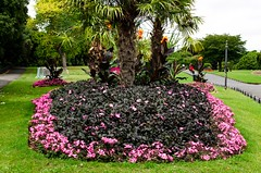 Phoenix Park of Dublin (Ireland) (giannizigante) Tags: dublino irlanda phoenix park