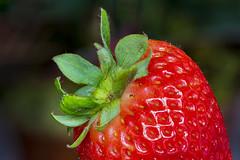 V064_MPC 3144 (Paulo Villa) Tags: strawberry plant nature macro closeup garden botanical