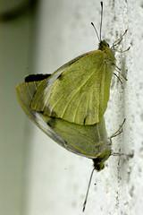 Schmetterlinge (petra.wruck) Tags: schmetterling butterfly insekten insekt insects insect tiere animals macro makro