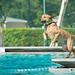 St. Petersburg 2018 Dog Swim Day
