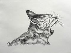 The Yawn (Mattijsje) Tags: drawing tekening pentekening kat poes cat pussy snorharen yawn yawning gapen mattijs mattijsje roofdier predator ink pen oostindische inkt fur bont littledoglaughednoiret