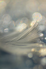 Der Traum eine Feder---- écoutez, je parle 'mouette' (FLOCVROFF) Tags: feder feather plume macro 50mm canon chivaroff dreamy pastel soft poetry poesie 7dwfanythinggoes bokehlicious bokehwednesday