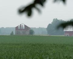 Failing (joeldinda) Tags: woodlot barn cloud sky building fog weather tree farmyard beans soybeans august 4210 fields graysky greysky gray grey oneida em1 omd omdem1mkii olympus michigan eatoncounty 2018 em1ii