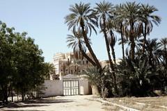 House with gate and palm trees (motohakone) Tags: jemen yemen arabia arabien dia slide digitalisiert digitized 1992 westasien westernasia ٱلْيَمَن alyaman