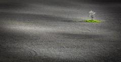 The Guardian (Fernando Piçarra) Tags: tuscany toscana italy san quirico dorcia val d´orcia dus color green sunlight sun sunshine landscape land field fields itália belvedere poggio podere beauty morning