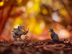 A possible Truce? (JoeCow) Tags: toyphotography toyphotographers toys schleich lego cat robot neko keko staringcontest