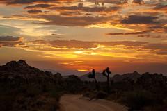 Keys Ranch Road (East of 29) Tags: joshuatreenationalpark joshuatree keysranchroad dustyroad sky sunset desert