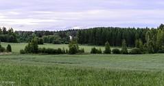 Naapurin pellot (nousku) Tags: mmp suomi finland landscape sysmä tamron