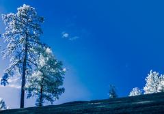 Trees on a Hill - Infrared (Neal3K) Tags: kolarivisionblueirndvifilter ir infraredcamera fayettecountyga georgia