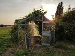 (anjamation) Tags: august summer 2018 unaltered samsunggalaxys8 dusk thesun glasshouse fields efeu vegetablekingdom drivhus light yellow