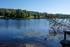 03092018-DSCF1022-2 (Ringela) Tags: österdalälven leksands rastplats september 2018 sweden river nature tree fujifilm xt1