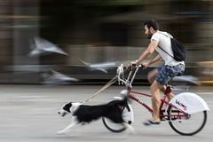 on the run (charlesgyoung) Tags: charlesyoung barcelona spain motion blur bicycle dog nikon nikonphotography nikondx streetphotography travelphotography pigeons