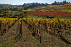 Vineyards at Boudry (Bephep2010) Tags: 2017 77 alpha boudry herbst landschaft neuchâtel neuenburg sal1650f28 slta77v schweiz sony switzerland wald weinberg autumn forest gelb landscape red rot vineyard yellow ch