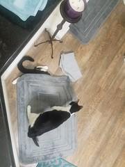 20180719_223514 (sobca) Tags: cat kottur kitte eesa miu kat pussi kato chat katze popoki gatto chatool billi felis cattus gato katt meo кошка बिल्ली 猫 γάτα vighro ᏪᏌחתול