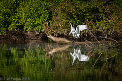 Great Egret (jwfuqua-photography) Tags: birds greategret wadingbirds nature waterfowl pennsylvania egrets peacevalleynaturecenter jwfuquaphotography buckscountyparks buckscounty jerrywfuqua