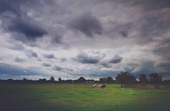 Country life (miroslav.tokarsky) Tags: landscape nature cows animals clouds cloudporn sky skies drama dramatic colors weather beauty somerset outdoor wallpaper huaweip20pro huawei screen