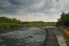 Naturreservat Soos (tucsontec) Tags: naturreservat soos tchechien travel moor clouds cloudscape steg landschaft landscape gras