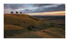 Roundway Down Sunset (JRTurnerPhotography) Tags: fujifilm fujix fujixt2 fujinonxf1655mmf28 fujifilmx jaketurner jrturnerphotography picture print image photo photography photograph photographer mirrorless mirrorlesscamera august summer 2018 landscape landscapephotography shadows wiltshire england uk unitedkingdom greatbritain britaineu europe sunset sunlight sunny sun goldenlight farming farm farmland countryside field fields clouds bigsky skyscape naturallandscape roundwaydown roundway devizes rollinghills chalkhills lonetrees hillfort ironagehillfort