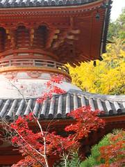a (31) (hiromi89) Tags: japan beauty beautiful scenery flower wood pond