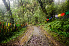 The Holy Path (abhishek.verma55) Tags: yuksom khecheopalrilake ©abhishekverma tree trees path road flickr travel canon550d sikkim incredibleindia outdoor flags colourful colour colorful colors nature natural beautiful beautifulnature flag prayerflags outdoors outside rain cold wet photography westsikkim rural greens green greenery beauty forest india indiatravel landscape scenic scenery scene travelphotography travelphotos wanderlust explore leaves holy naturephotography landscapes
