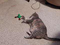 DSCN3219 (mestes76) Tags: 100617 duluth minnesota cats pets fetty fettucini cattoys butterflies playing
