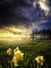 Flowers (patkelley3) Tags: spring flowers yellow sunset clouds sky
