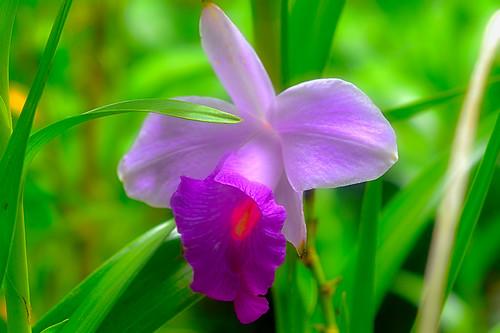 Passionate Purple
